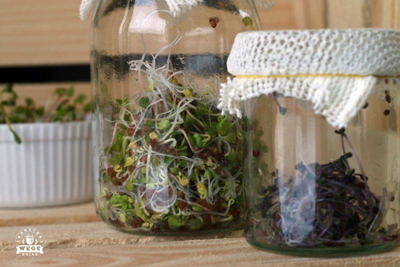 Kiełku_jemy czyli dlaczego warto i jak kiełkować nasiona